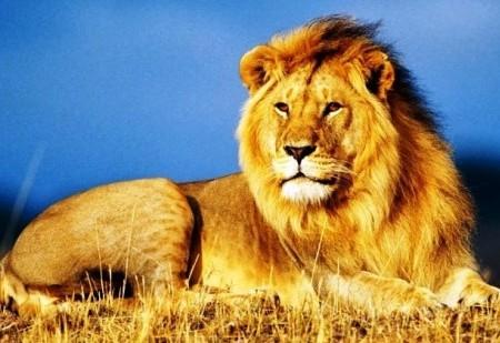 Como é o signo Leão?