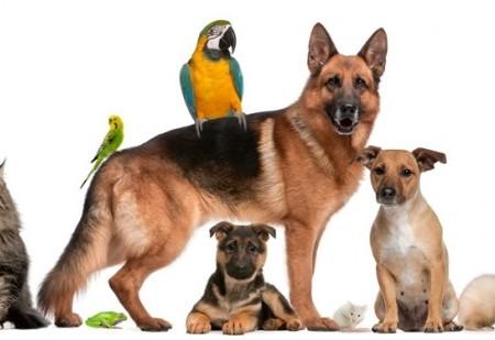 Características do animal de estimação de cada signo