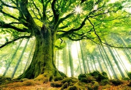 O horóscopo das árvores