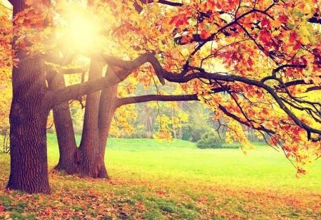 O Equinócio de Outono pode mudar a sua vida!
