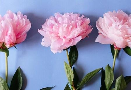 Saiba como pode ter bom Feng Shui através das flores