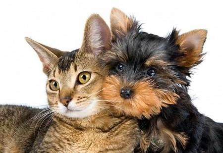 Sabe qual é a missão que o seu animal de estimação veio desempenhar na sua vida?