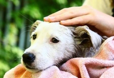 Benzedura para proteger animais de estimação contra o mau-olhado