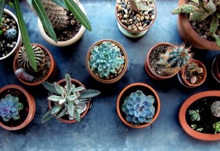 Plantas que protegem contra as más energias